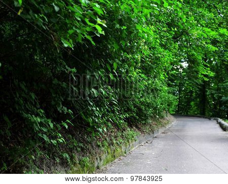 Walkway and green trees in park