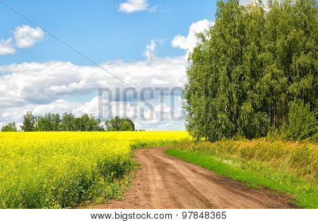 Landscape With The Road Along A Field Of The Blossoming Colza To The Sunny Summer Day