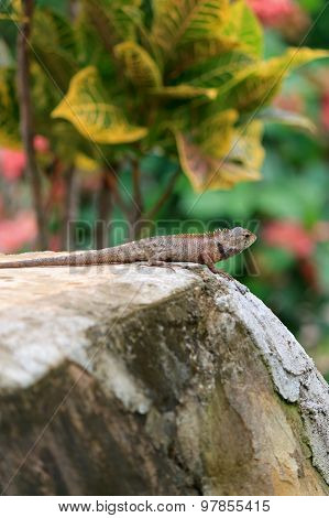 A Garden Lizard On A Green Background