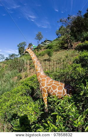 mother giraffe
