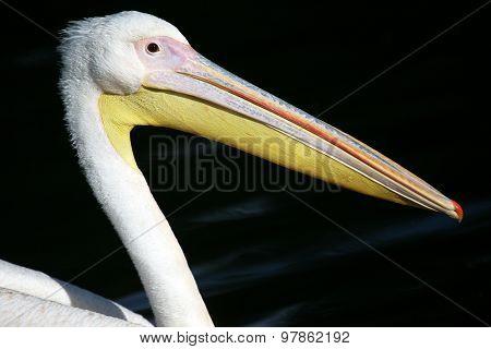 The Beak Of A Pelican