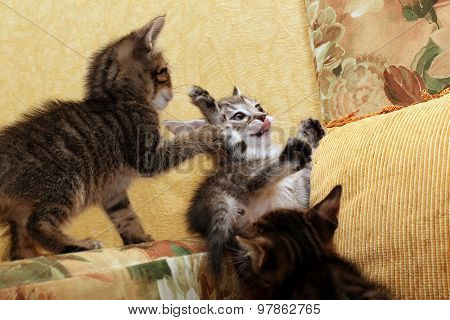 Three Little Kittens Playing