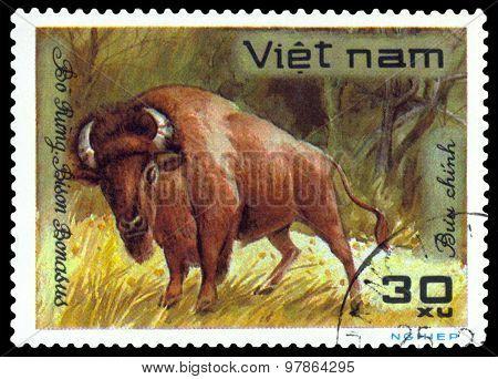 Vintage  Postage Stamp.  Bison Bonasus.