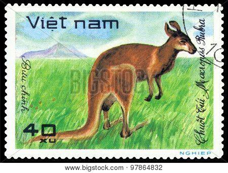Vintage  Postage Stamp.  Kangaroo.