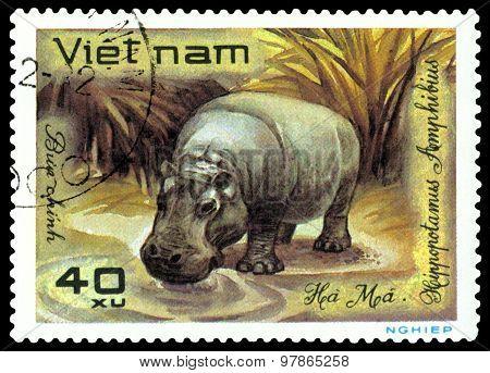 Vintage  Postage Stamp. Hippopotamus.