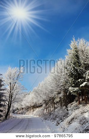 Christmas sunny morning. Rolled ski road in pine forest.