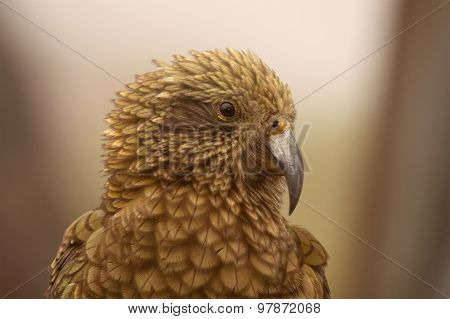 Kea Notched View