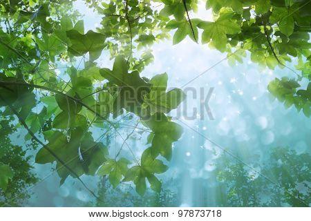 autumn leaves background  at  chonburi garden  thailand