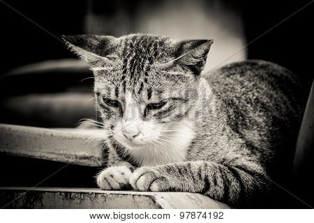 Close-up Portrait Of Sad Lonely Cat