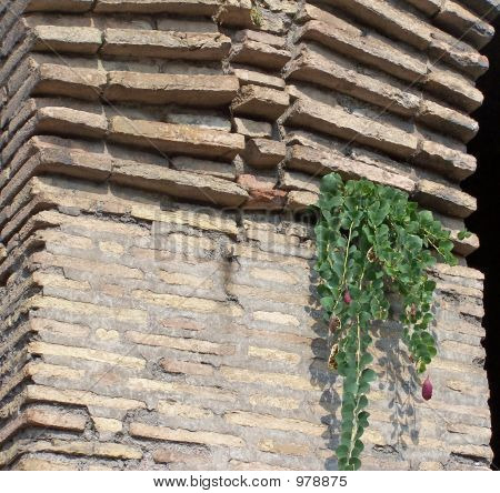 Plant Growing From Wall At Coliseum, Rome, Italy