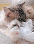 Cat Nap 1 poster