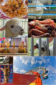 stock photo of carnival ride  - Attractions at summer carnival including animals rides and food in collage - JPG