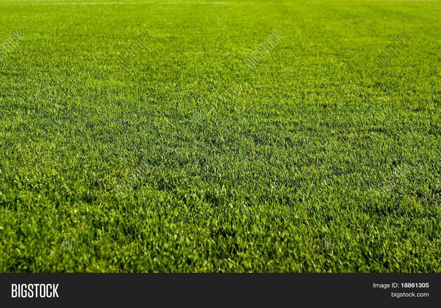 Nice Green Grass Texture Form Image & Photo