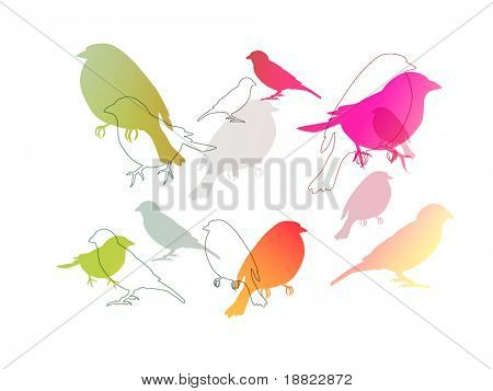 Birds in many colors