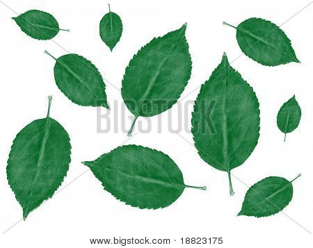 Mint leaves background