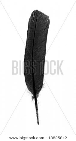 Black crow feather