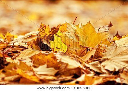 Haufen von getrockneten Blättern