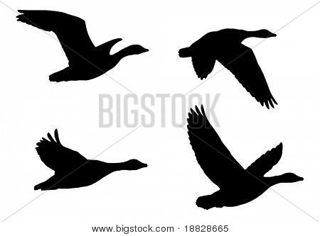 Illustrated flying birds