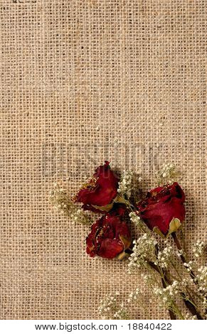 Red withered roses on sacking romantic conceptual background