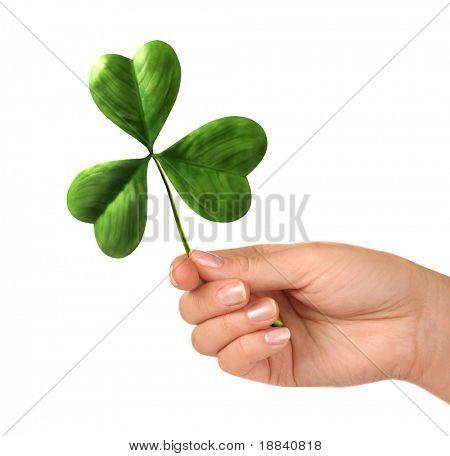 Female hand holding shamrock leaf Saint Patrick's Day celebration concept Isolated on white background