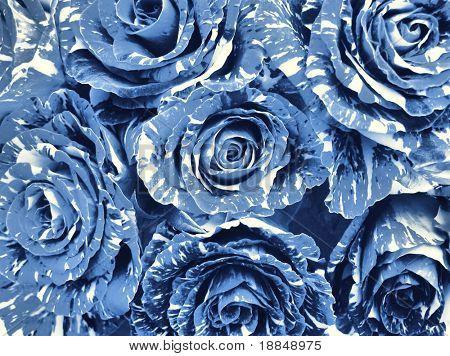 photographic reproduction cyanotype