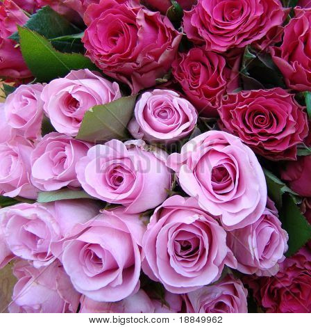 photograph of a bouquet of pink lettuce roses and pink baby roses