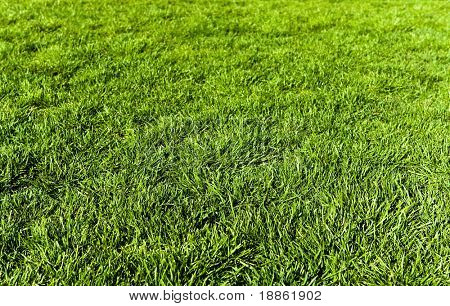 Grown up green grass texture