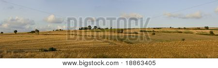 Wide and high resolution panoramic landscape during summer with hills, trees and wheat fields