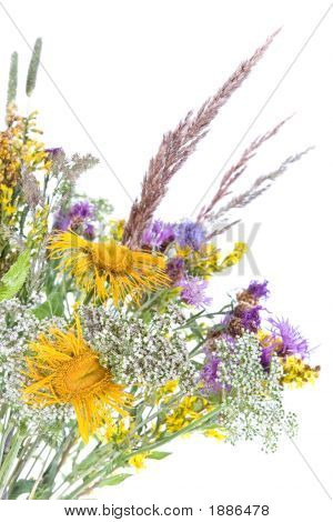 Bouquet Of Field Flowers And Plants