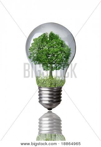 Tree in a light bulb isolated on white with clipping path