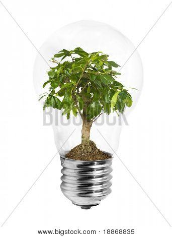 Lightbulb with green plant inside on white