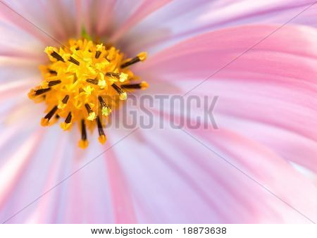 Beautiful Flowers Border.Floral design. Shallow depth of focus