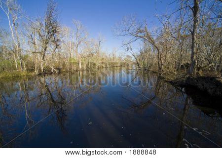Swamp 14