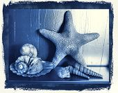 photographic reproduction cyanotype Delft Blue still life with shells