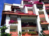 pic of hacienda  - Flower boxes in full bloom in each window of a Mexican hacienda hotel - JPG