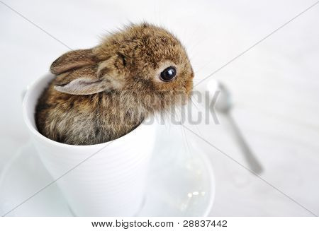 Rabbit cute baby