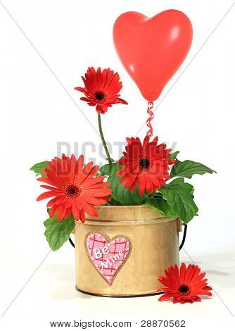 Pretty potted daisy with balloon for valentine's day.