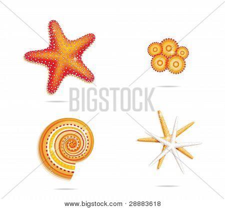 tropical sea stars symbols set