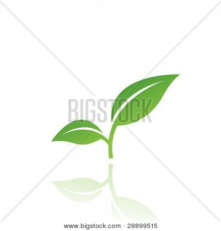 Grünes Blatt, isolated on white