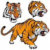 Bengal Tiger Set Suitable As Logo For Team Mascot, Royal Tiger Drawing Sketch In Full Growth, Tiger  poster