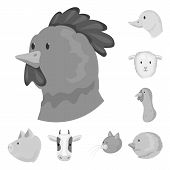 Isolated Object Of Countryside And Homestead Icon. Set Of Countryside And Breeding Vector Icon For S poster