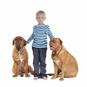 stock photo of dogue de bordeaux  - Total safety concept  - JPG