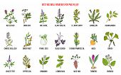 Herbal Remedies For Pms Premenstrual Syndrome. Hand Drawn Vector Set Of Medicinal Plants poster