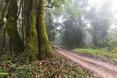 Dirt Track Running Past An Old Tree In A Mist Covered Forest poster