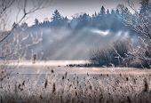 Deer Lake Mist, British Columbia. Sunshine And Mist On Deer Lake In Burnaby, British Columbia. poster