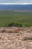 Red Hartebeest Antelope In The Wild. On Safari Game Drive In Africa. Explore Wildlife, Safari Advent poster
