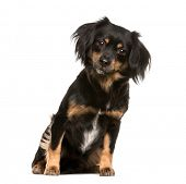 Mixed-breed dog, 3 years old, sitting in front of white background poster