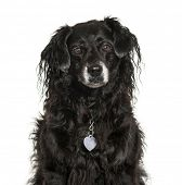 Mixed-breed dog in front of white background poster