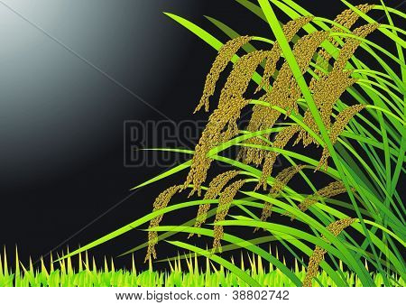 Beautiful Autumn Scenery - ripening the rice in the golden field : vector illustration