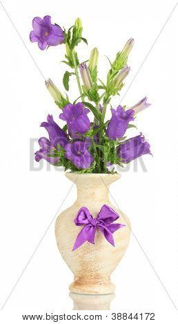 blue bell flowers in vase isolated on white